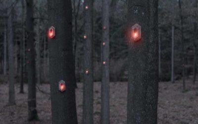 Pixi, una experiencia Feeling Wood